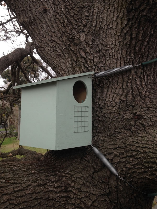 7.1 Spring design nest box installations